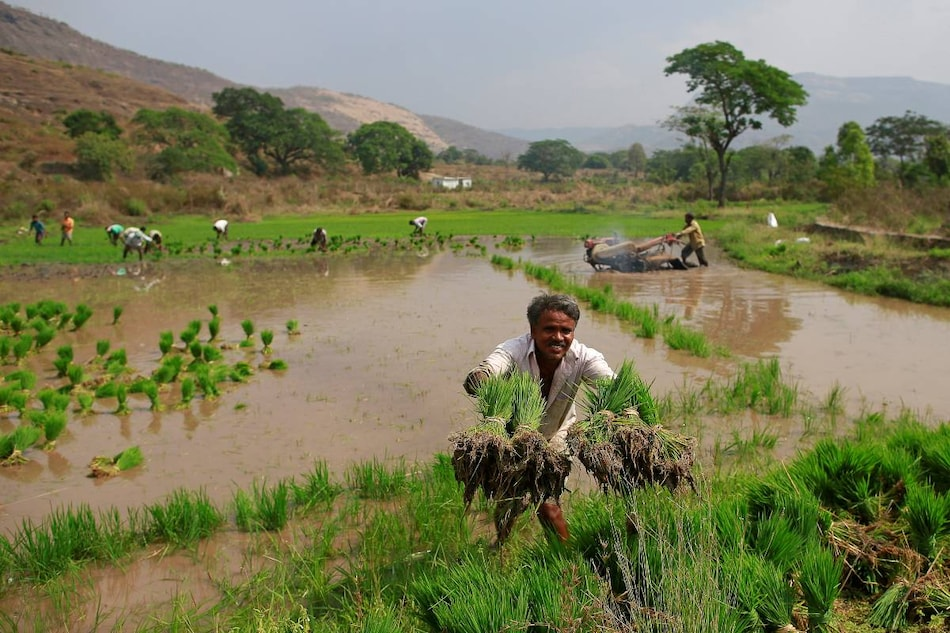India's Digital Database for Farmers AgriStack Piloted by Microsoft Stirs Fears About Privacy, Exclusion