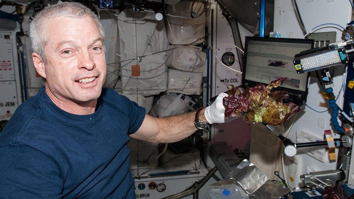 ISS Astronauts Grow Earth-Like Fresh Lettuce in Space