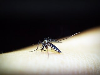 NASA Pioneers Malaria-Predicting Tech in Myanmar