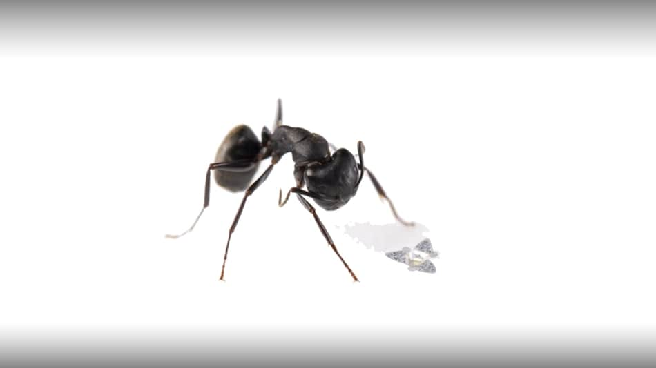 Microfliers, or Flying Microchips, Are the Smallest Human-Made Flying Structures: Research