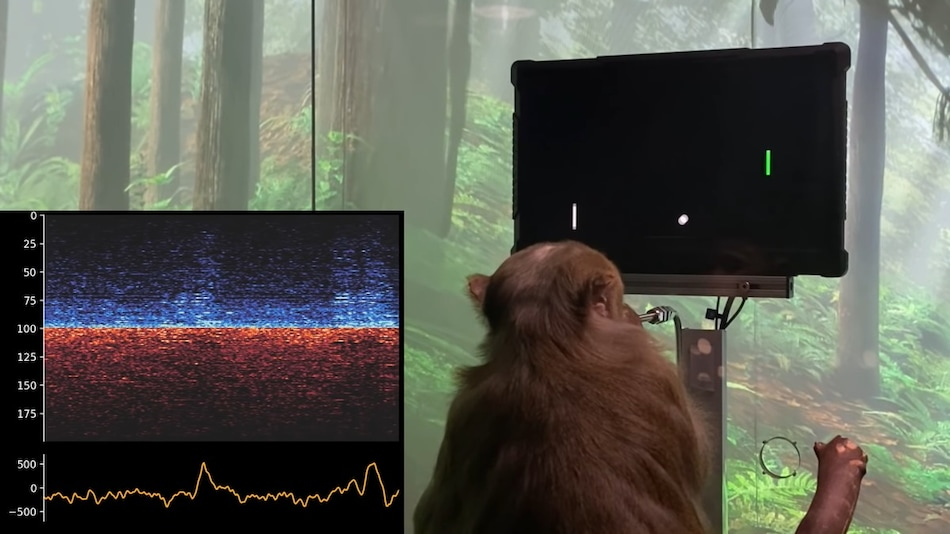 Elon Musk's Neuralink Lets a Monkey Play Pong With His Mind: Watch Video