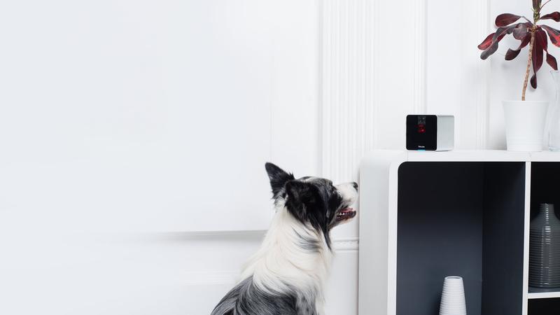 Top 5 Gadgets Your Pet Deserves
