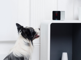 Top 5 Gadgets Your Pet Deserves