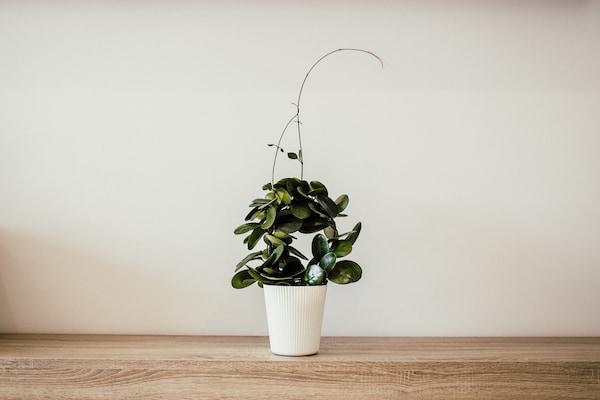 Stylish Mini Planters For Desks