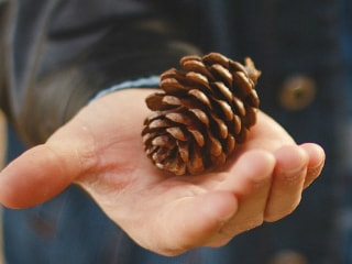 Xiaomi's In-House Pinecone Processor Teased in Another Video Ahead of Tuesday Launch