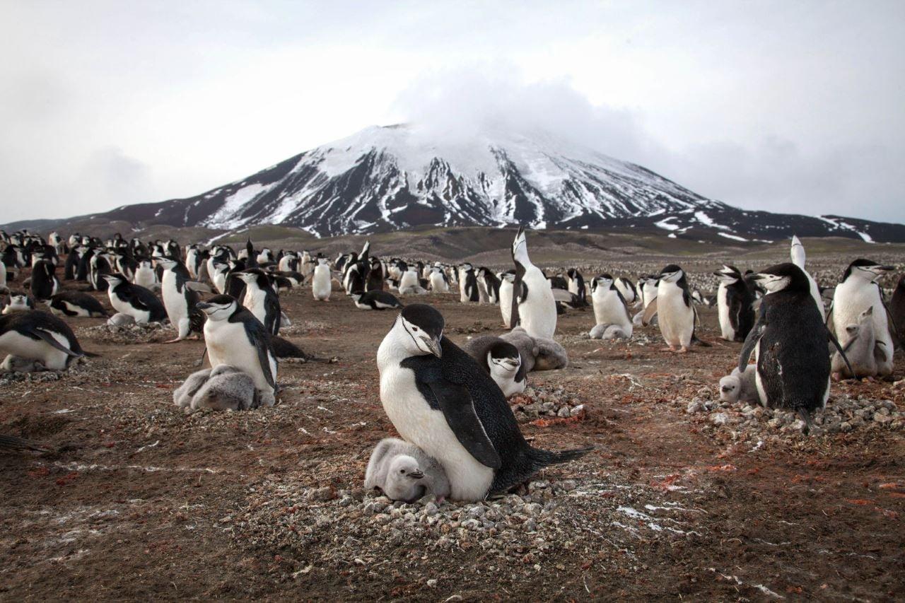 planet earth 2 penguins Planet Earth 2 penguins