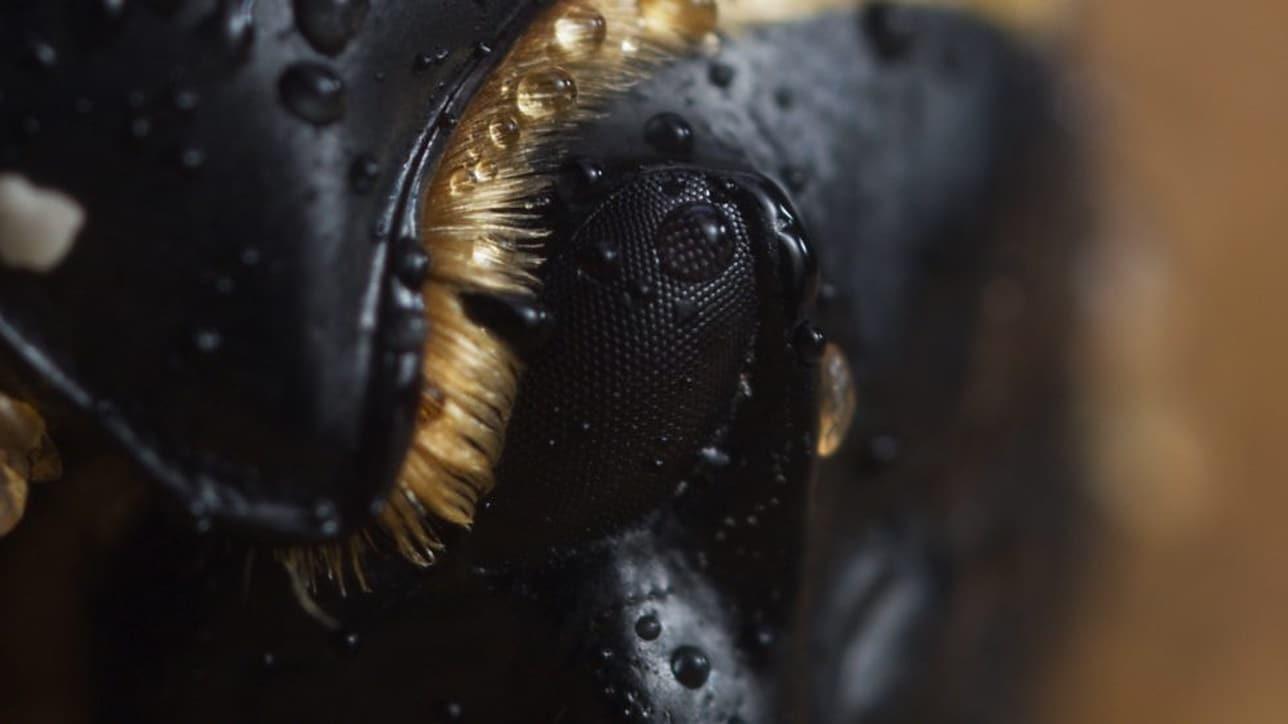 planet earth ii beetle Planet Earth II BBC beetle