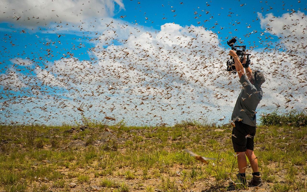 planet earth ii locusts Planet Earth II BBC locusts
