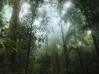 Smartphones, Satellite Data Helped Indigenous Peruvians Save Amazon Rainforest: Study