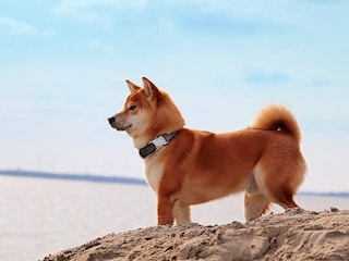 Dogecoin - What I Hate, Love, and Fear About the Cryptocurrency