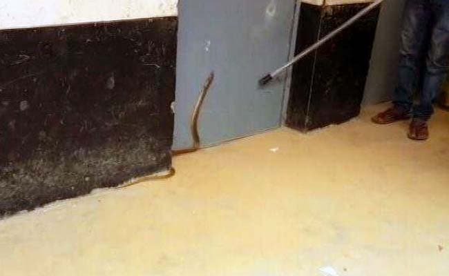 Cobra Causes Panic At Bengaluru Polling Booth, No Voting For 20 Minutes