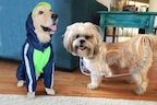 Get A Raincoat For Your Dog To Provide Him Comfort