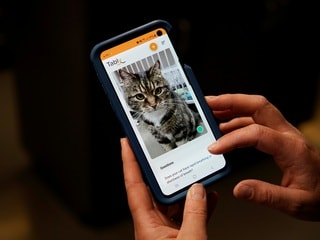 Feline Okay? Tably App Can Tell You if Your Cat's Happy