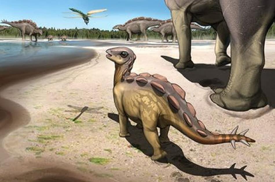 Cat-Sized Stegosaur's 6cm Long Footprints Found in China
