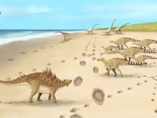 Footprints of UK's Last Dinosaurs From 110 Million Years Ago Found in Kent