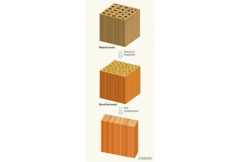 wood nature body full Wood