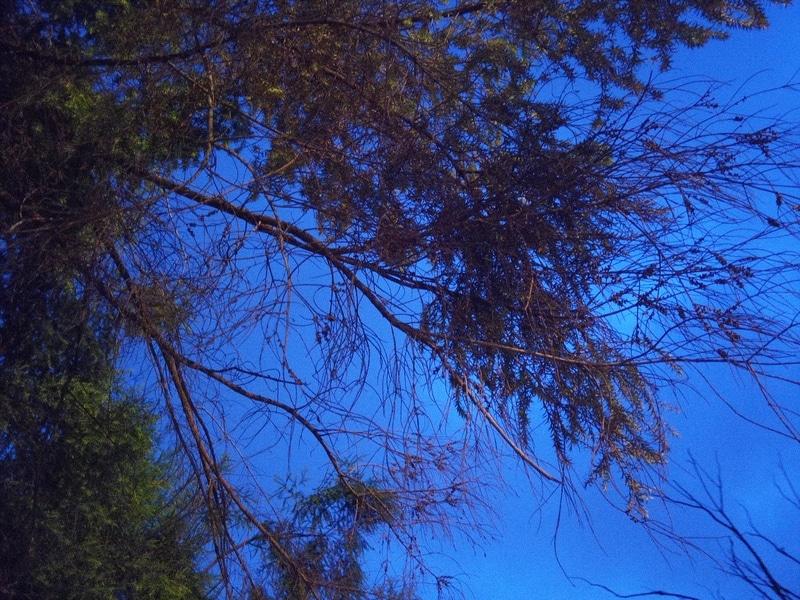 [Image: gionee_s6s_camera_sample_1472117200712-800x600.jpeg]